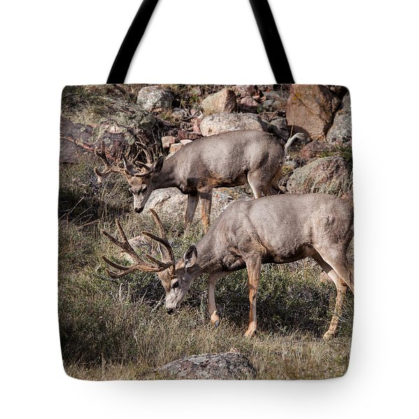 Mule Deer Bucks Tote Bag