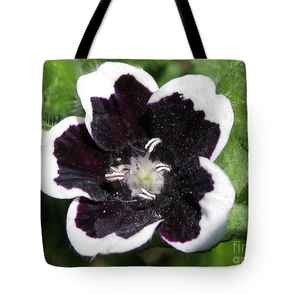 Tote Bag featuring the photograph Nemophilia Named Penny Black by J McCombie