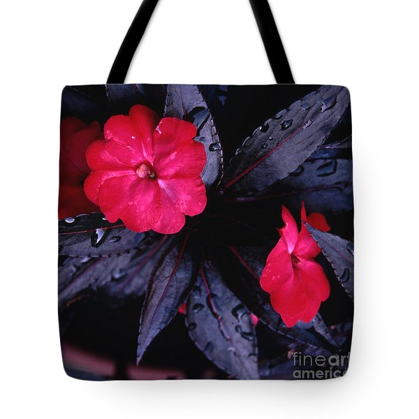 New Guinea Impatiens Tote Bag by Tom Wurl