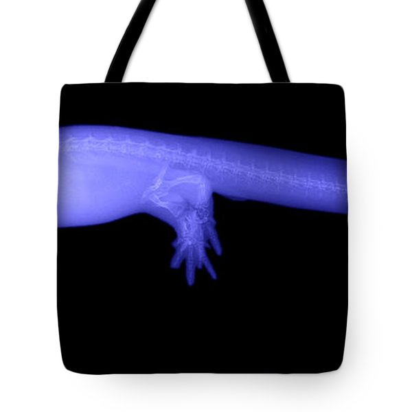 Newt Tote Bag by Ted Kinsman