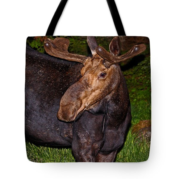Night Moose 1 Tote Bag by Lloyd Alexander