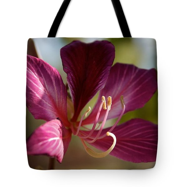 North Park Tote Bag by Joseph Yarbrough