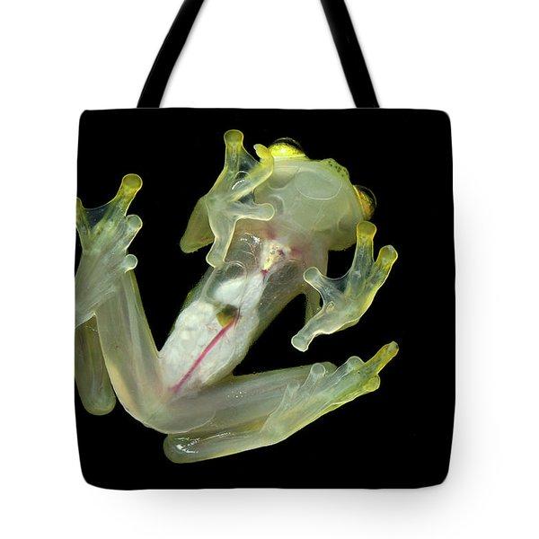 Northern Glassfrog Hyalinobatrachium Tote Bag by Thomas Marent