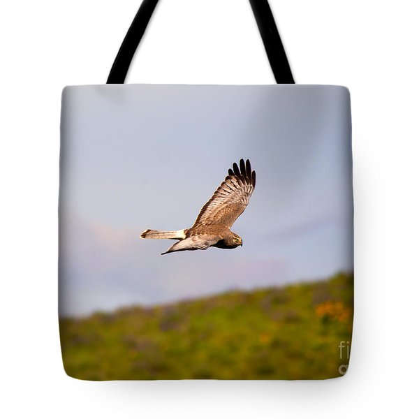 Northern Harrier Flight Tote Bag by Mike  Dawson