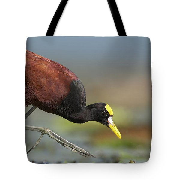 Northern Jacana Foraging Costa Rica Tote Bag by Tim Fitzharris