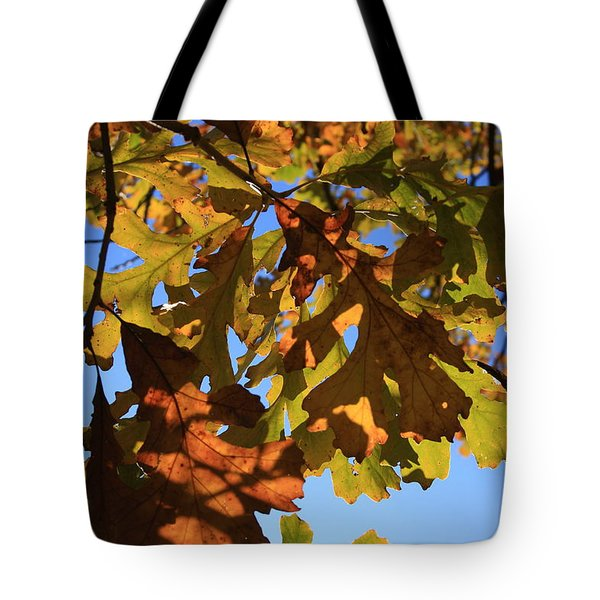 Oak Leaves With Backlighting Tote Bag by Lyle Hatch