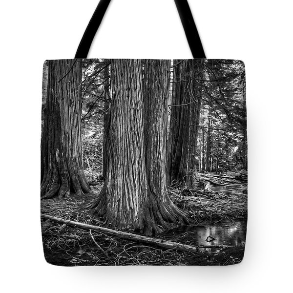 Old Growth Cedar Trees - Montana Tote Bag by Daniel Hagerman