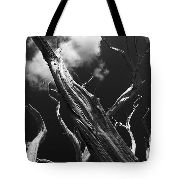 Tote Bag featuring the photograph Old Tree by David Gleeson