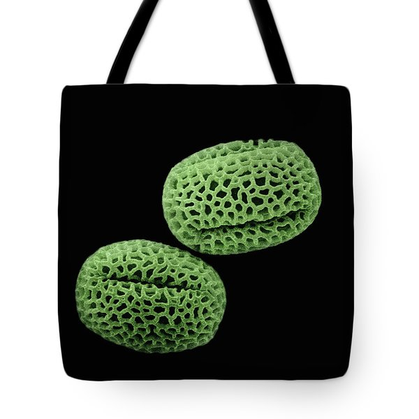Olive Olea Europaea Sem Close-up View Tote Bag by Albert Lleal