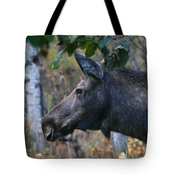 Tote Bag featuring the photograph On Alert by Doug Lloyd
