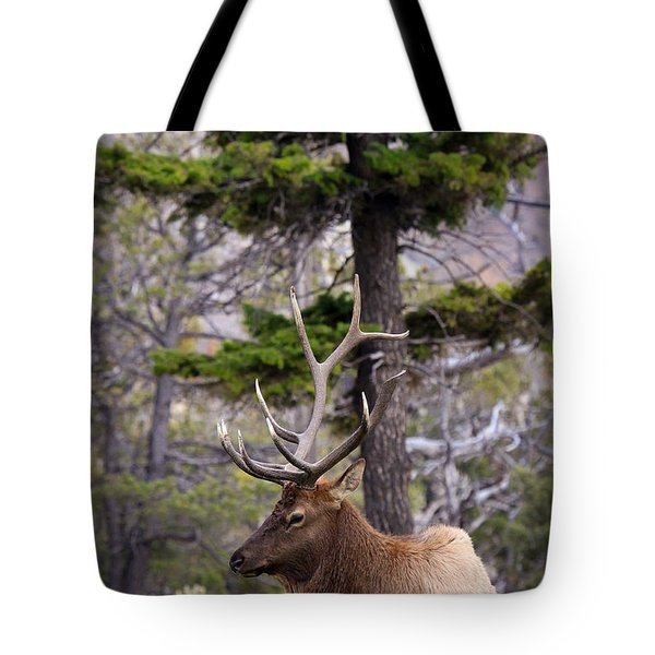 Tote Bag featuring the photograph On The Grass by Steve McKinzie