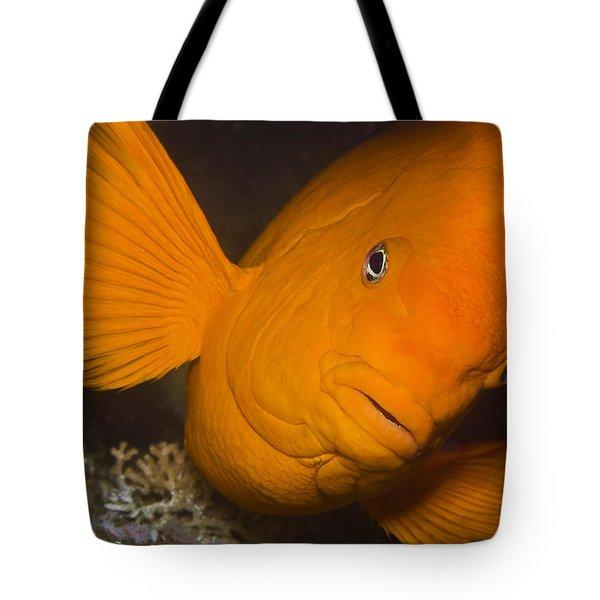 Orange Garibaldi Tote Bag by Mike Raabe