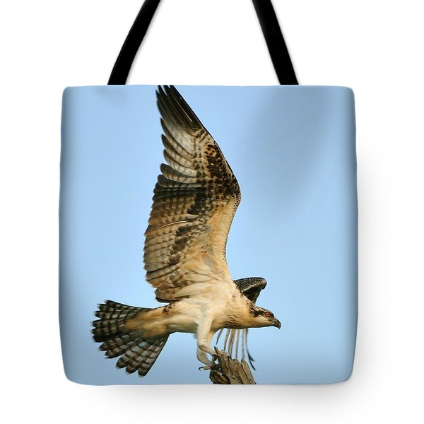 Tote Bag featuring the photograph Osprey After Flight by Rick Frost