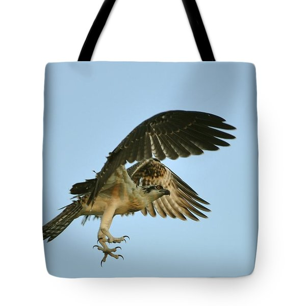 Tote Bag featuring the photograph Osprey In Flight by Rick Frost