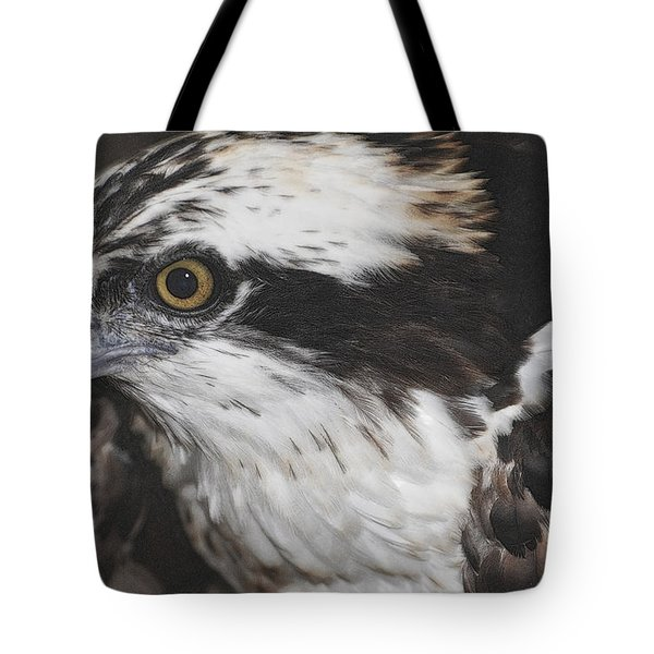 Tote Bag featuring the photograph Osprey by Lydia Holly