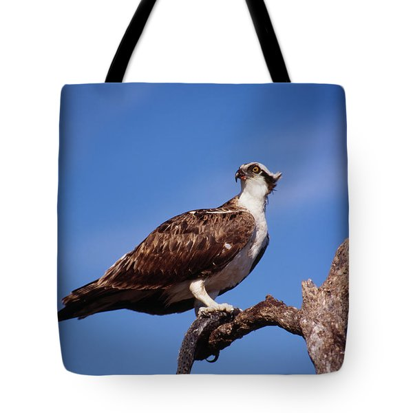 Osprey With Fish Tote Bag