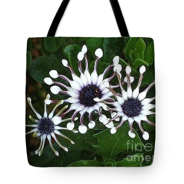 Tote Bag featuring the photograph Osteospermum by Katy Mei