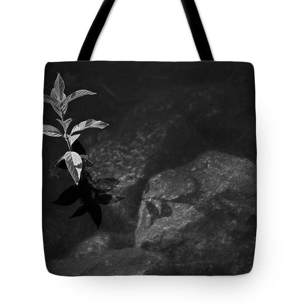 Out Of The Water Comes Shadows Bw Tote Bag by Karol Livote