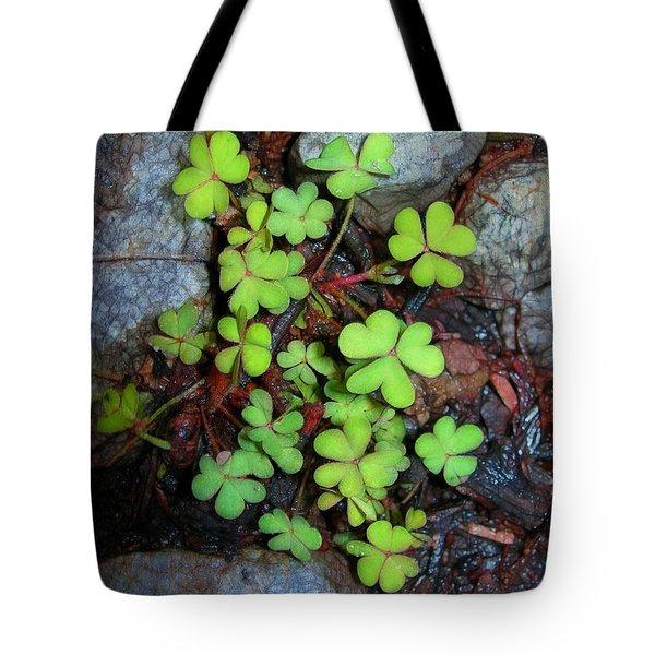 Oxalis Tote Bag by Judi Bagwell