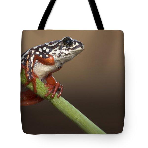 Painted Reed Frog Botswana Tote Bag by Piotr Naskrecki