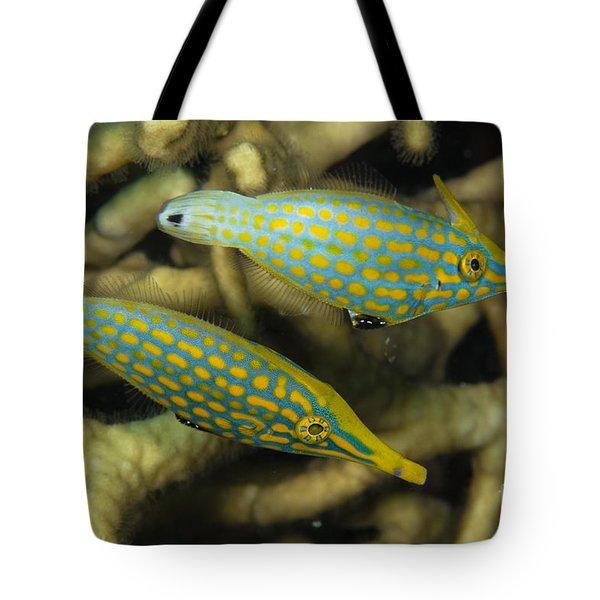 Pair Of Comet Fish, Australia Tote Bag by Todd Winner