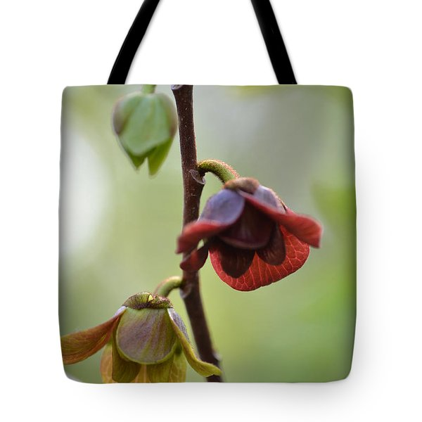Tote Bag featuring the photograph Paw-paw Flowers by JD Grimes