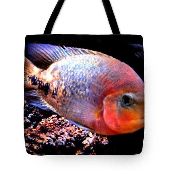 Peacefull Fish Swim  Around  In Denmark Tote Bag by Colette V Hera  Guggenheim
