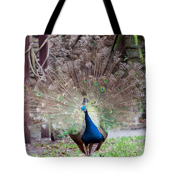 Peacock Display Tote Bag by Kenneth Albin