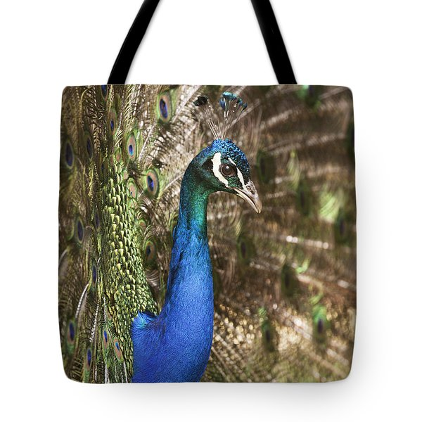 Peacock Display Tote Bag by Richard Garvey-Williams