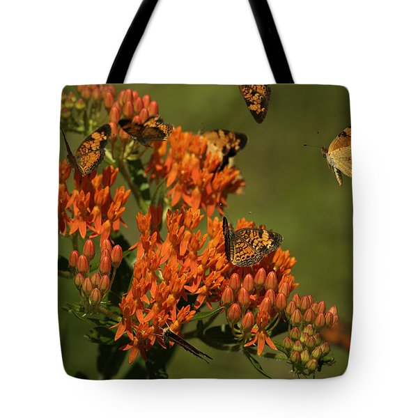 Pearly Crescentpot Butterflies Landing On Butterfly Milkweed Tote Bag by Daniel Reed