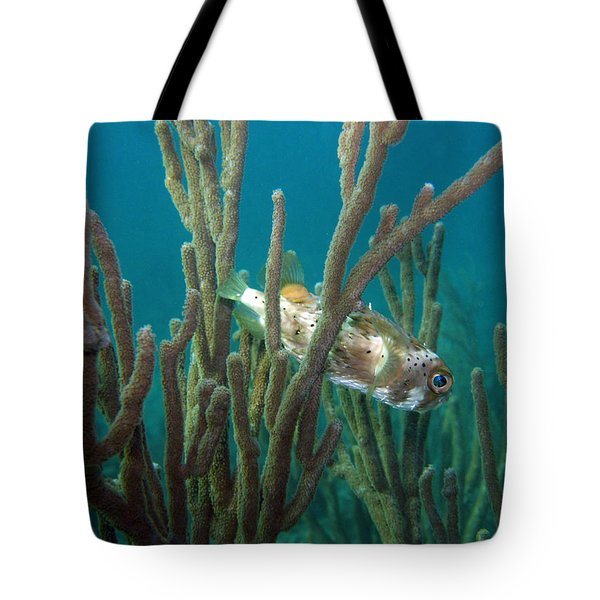 Peek-a-puffer Tote Bag by Kimberly Mohlenhoff