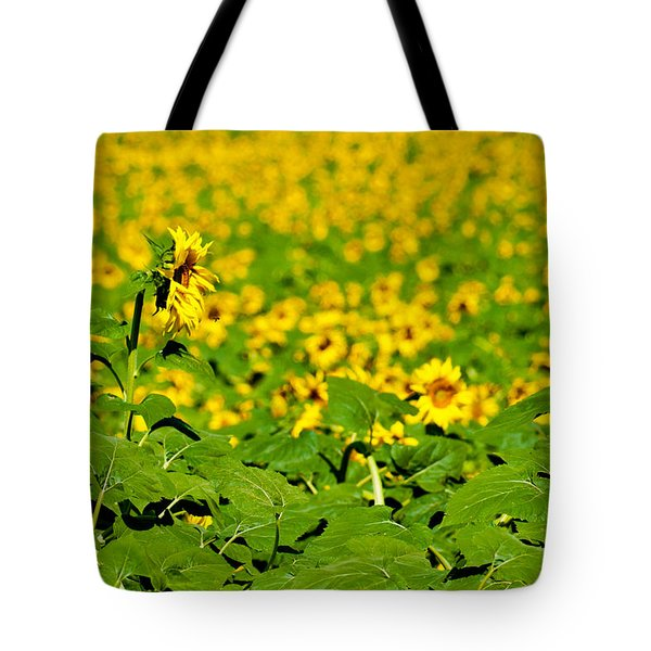 Peeking Above  Sea Of Yellow Tote Bag by Colleen Coccia