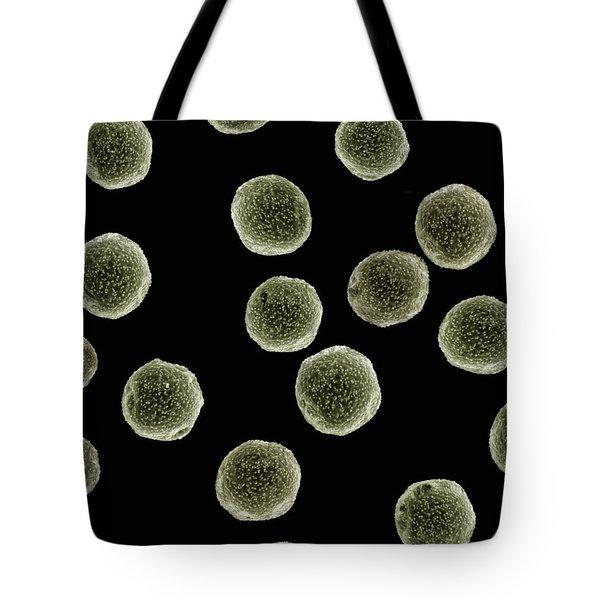 Pellitory Parietaria Sp Sem Close-up Tote Bag by Albert Lleal