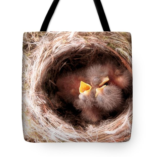 Phoebe Babies In Nest Tote Bag by Angie Rea