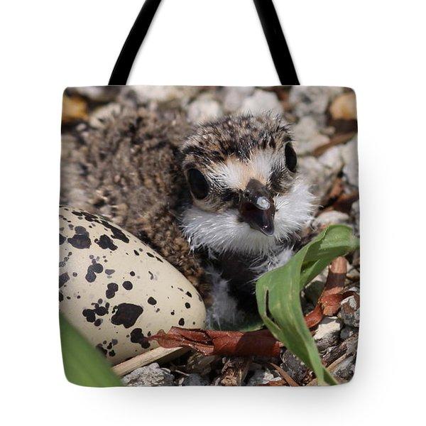 Killdeer Baby - Photo 25 Tote Bag