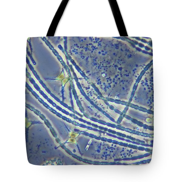Phytoplankton, Lm Tote Bag by M. I. Walker