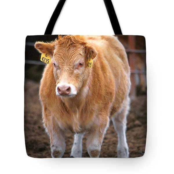 Piedmontese-hereford Crossbred Calf Tote Bag by Science Source