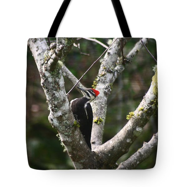 Pileated Woodpecker In Cherry Tree Tote Bag by Kym Backland