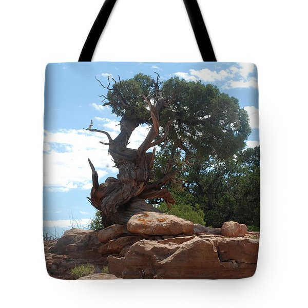 Tote Bag featuring the photograph Pine Tree By The Canyon by Dany Lison