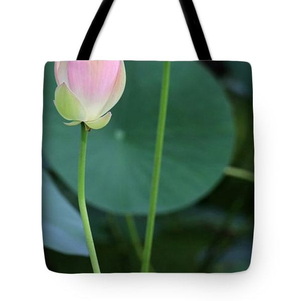 Pink Lotus Buds Tote Bag by Sabrina L Ryan