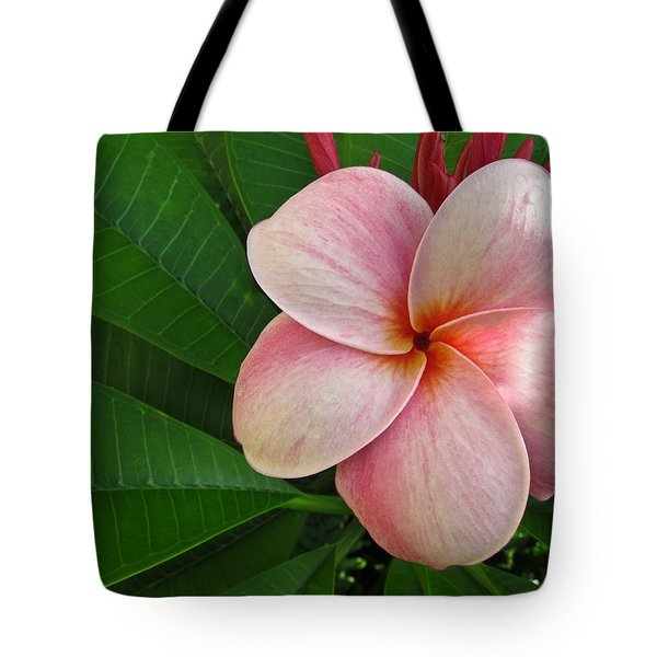 Tote Bag featuring the photograph Pink Plumeria by Shane Kelly
