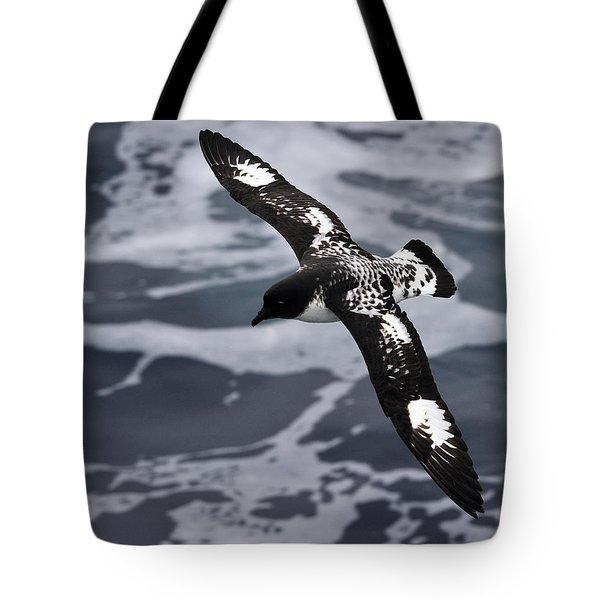 Pintado Petrel - Ancient Mariner Tote Bag