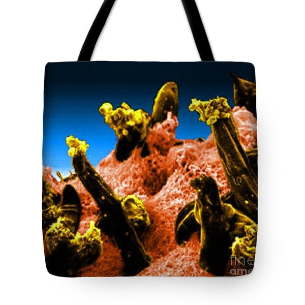 Plasmodium Gallinaceum, Sem Tote Bag by Science Source