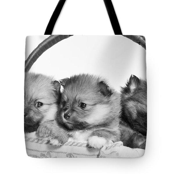 Pomeranian Tote Bag by Everet Regal