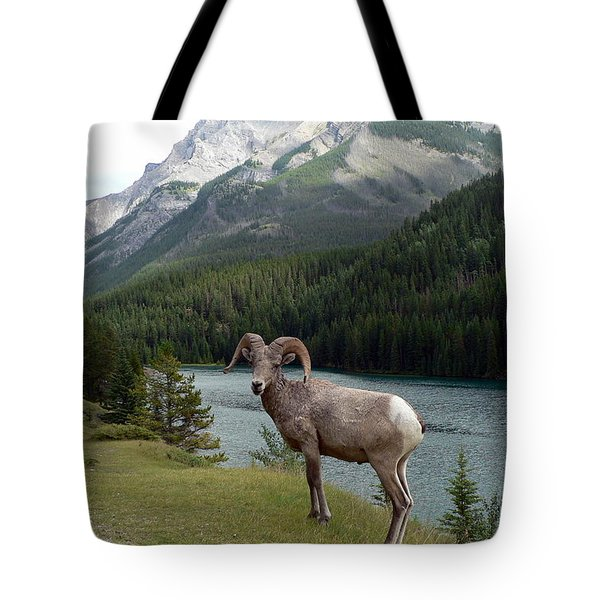 Tote Bag featuring the photograph Portrait Of A Bighorn Sheep At Lake Minnewanka  by Laurel Best