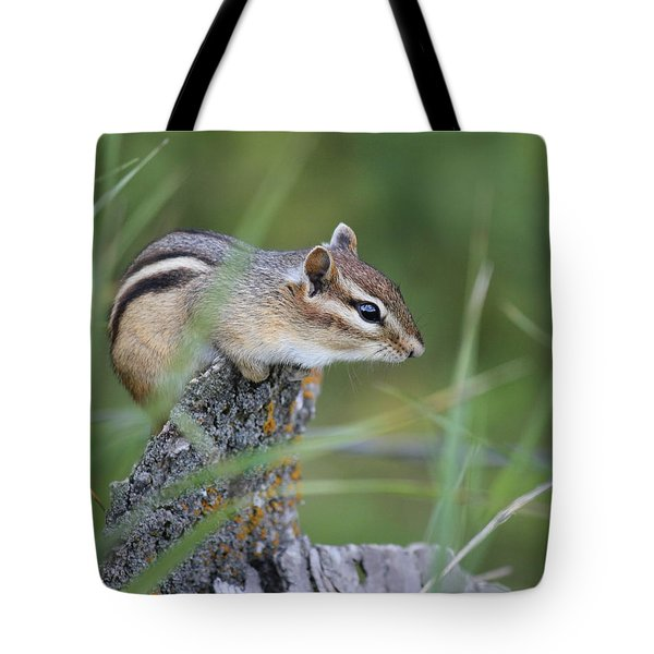 Tote Bag featuring the photograph Portrait Of A Chipmunk by Penny Meyers