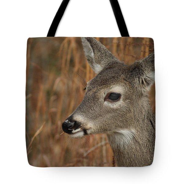 Portrait Of  Browsing Deer Tote Bag