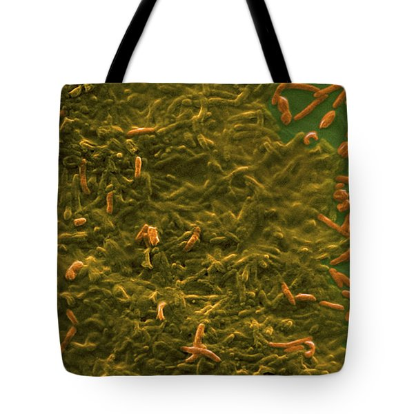 Potable Water Biofilm Tote Bag by Science Source