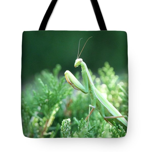 Praying Beauty Tote Bag