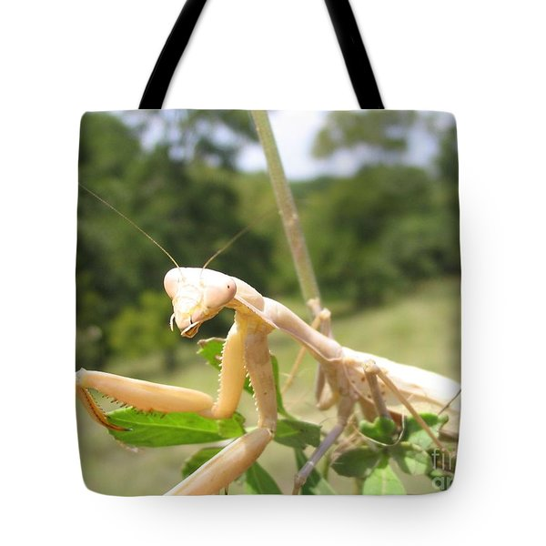 Preying Mantis Tote Bag by Mark Robbins